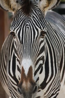 Backstage at the Zoo