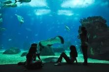 TheLisbon Oceanarium is the largest indoor aquarium in Europe